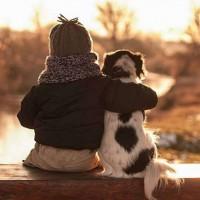Причины собачьей преданности