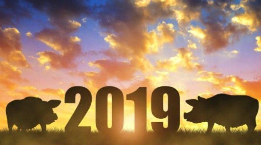 Новый 2019 год земляной свиньи: гороскоп по знакам зодиака